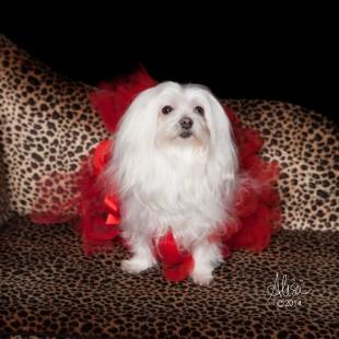 Houston Pet Photographer